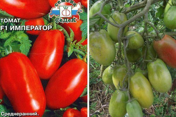 Сорт бетта — ранние польские помидоры