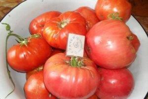 Фото, отзывы, описание, характеристика, урожайность гибрида томата «подарок женщине f1»