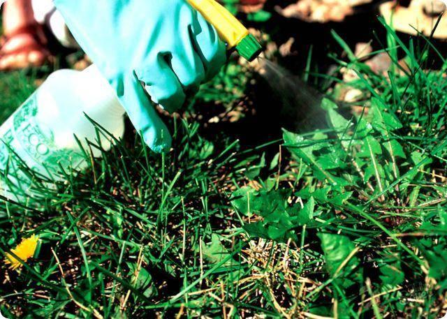 Как избавиться от травы на огороде раз и навсегда народными средствами