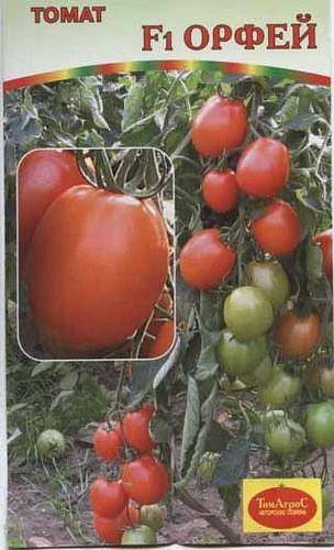 Помидоры «солярис»: характеристика, описание сорта и профилактика заболеваний томата