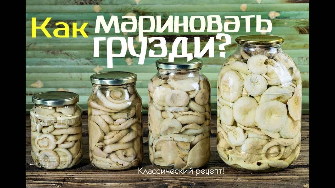 Грузди, соленые горячим способом: 6 рецептов