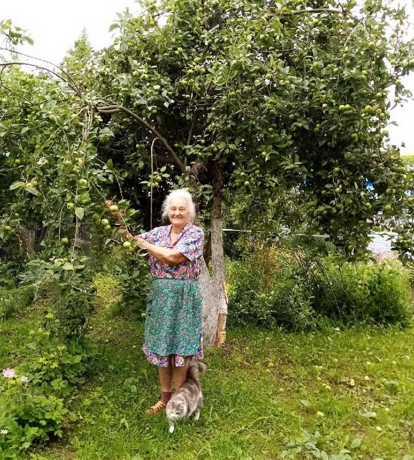 Применение железного купороса весной для защиты от вредителей сада
