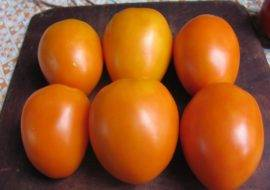 Томат пасхальное яйцо: описание сорта, как выращивать с фото