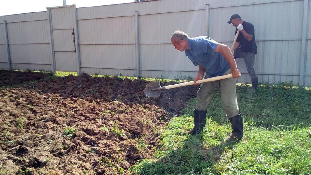 Борьба с сорняками на даче и огороде
