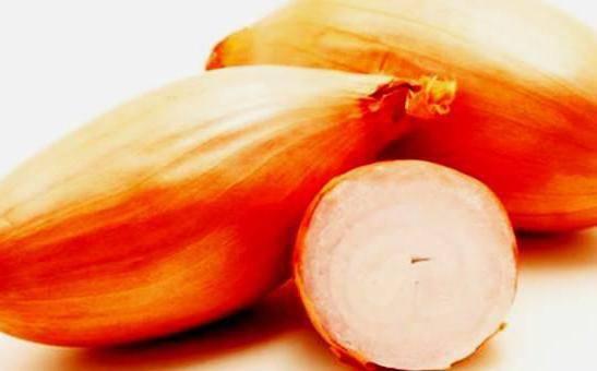 Высокоурожайный сорт лука, устойчивый к заболеваниям и вредителям «бамбергер»