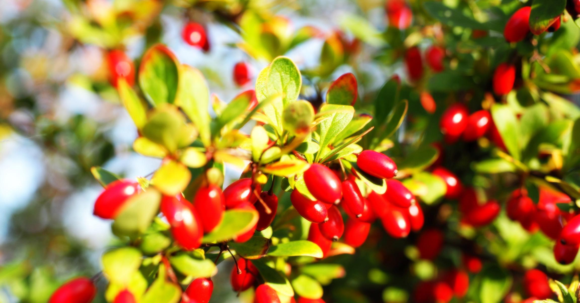 Варенье из кизила с косточкой: как варить, простой рецепт на зиму с фото