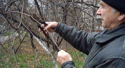 Как правильно формировать яблони от высадки до плодоношения