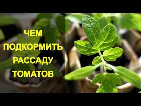 Удобрения для рассады томатов и перца