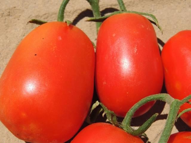 Сорт томата «рио гранде» — огородная классика: описание и характеристики сорта помидоров
