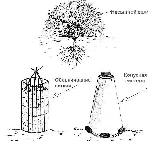 Уход за рододендроном осенью и секреты его подготовки к зиме