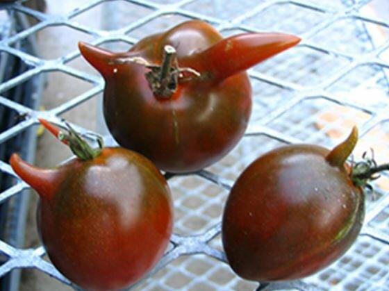 Томат женарос: характеристика и описание сорта, урожайность с фото