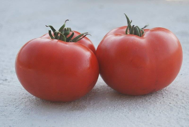 Описание высокоурожайного сорта томата сеньор помидор и правила выращивания