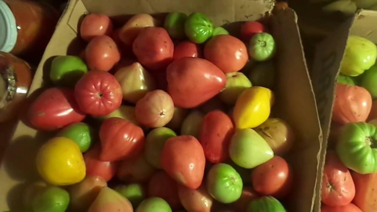 6 лучших рецептов аджики из зеленых помидоров «объедение» на зиму