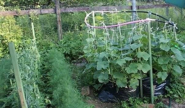 Как своими руками сделать вертикальные грядки (огород) из бутылок и труб