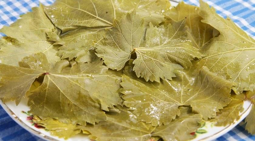 Топ 7 способов, как можно сохранить на зиму виноградные листья для долмы