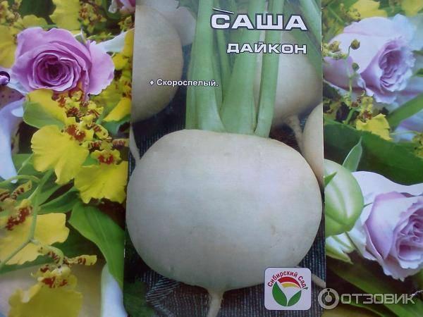 Дайкон мисато розовый блеск: описание сорта, выращивание, уход и урожайность с фото
