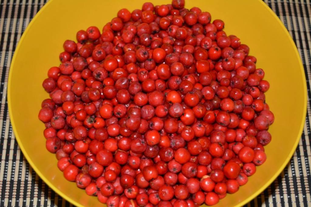 Варенье из красной рябины: все рецепты на подбор