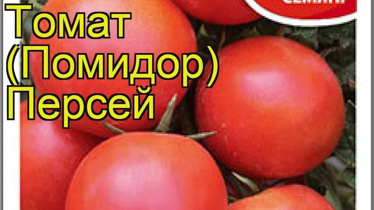 Описание и особенности выращивания сорта томата персей