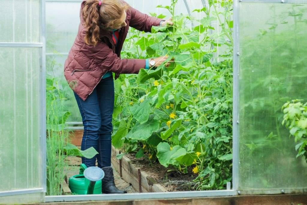 Обработка семян марганцовкой перед посевом