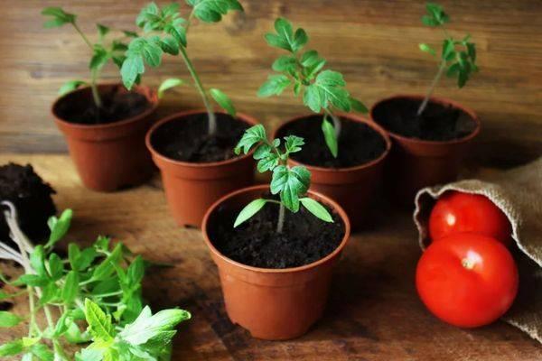 Лунный календарь посадки томатов в открытый грунт на 2020 год