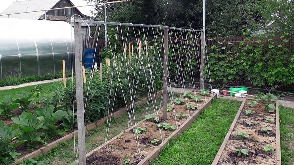 Как выращивать огурцы на шпалере в открытом грунте