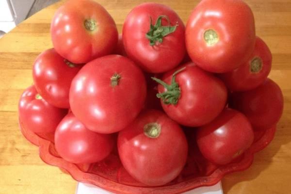 Сорт томатов космонавт волков - отличное решение для огородников