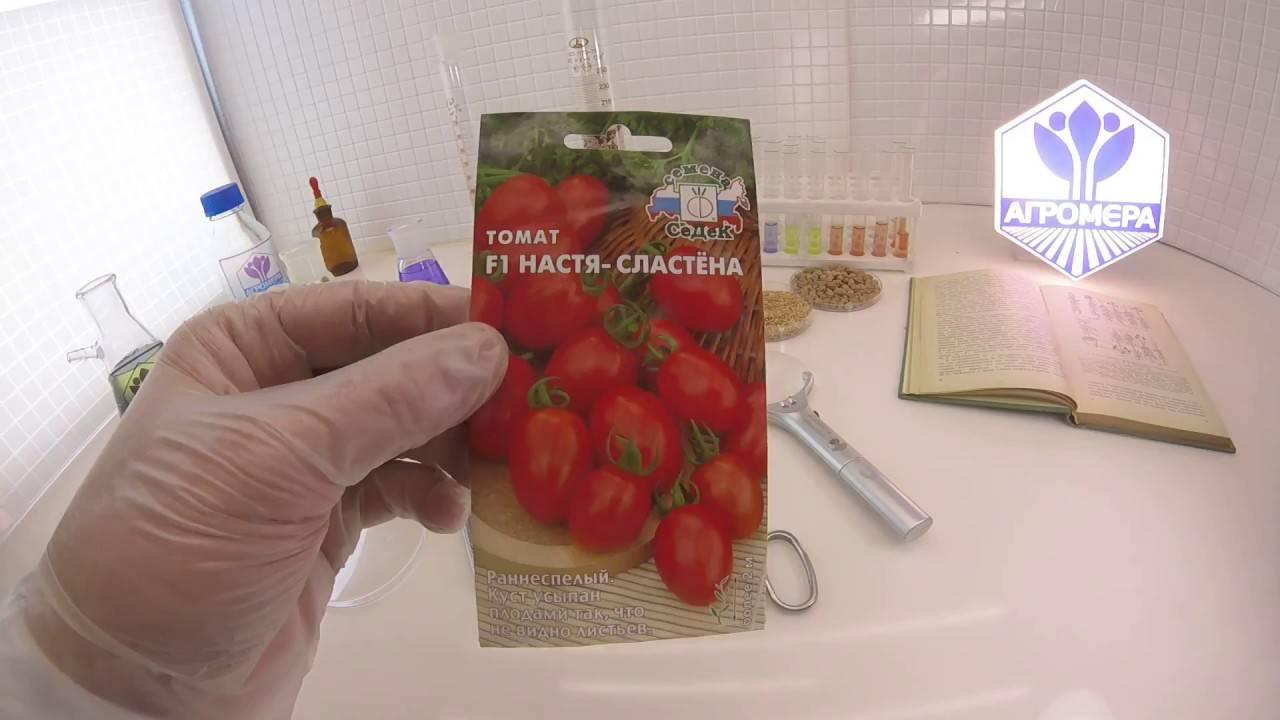 Особенности сорта томатов настя-сластена, его урожайность