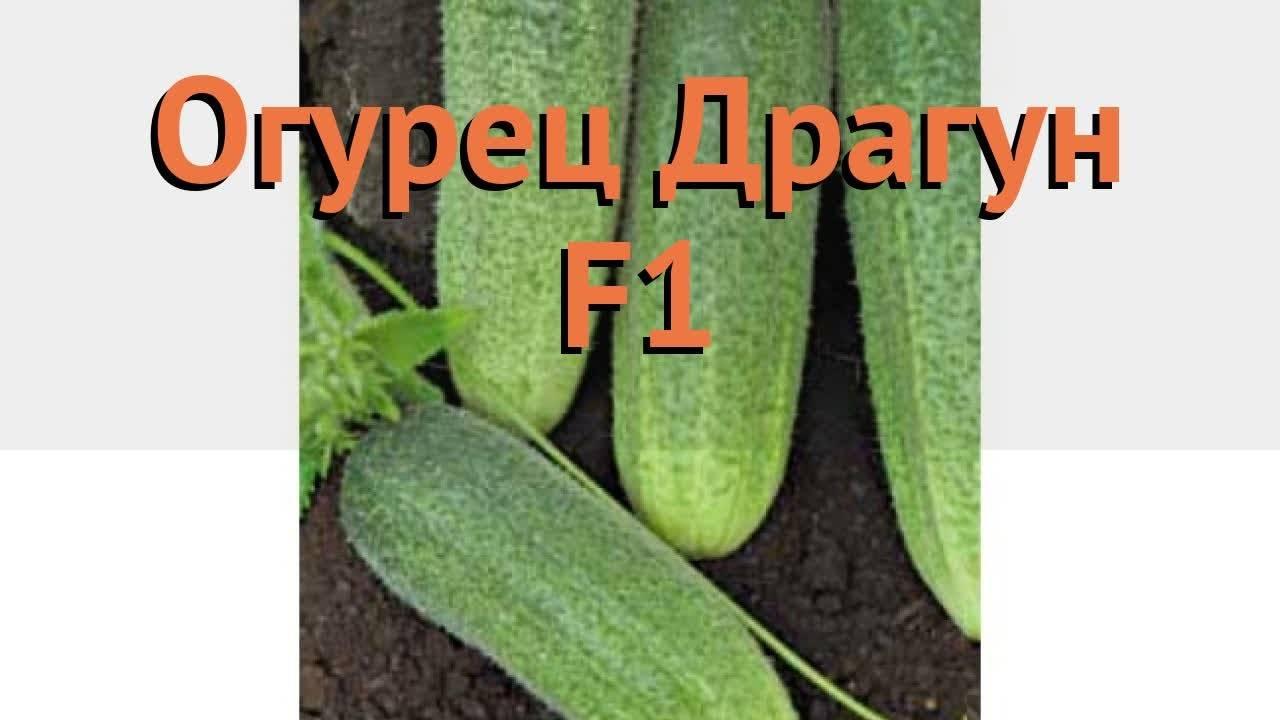 Описание сорта огурцов «богатырская сила» и секреты выращивания урожая