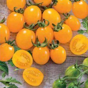 Сорт помидоров ильди