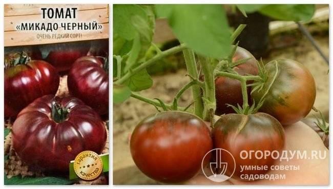 Томат чернично-сливочный: описание сорта, агротехника и отзывы с фото