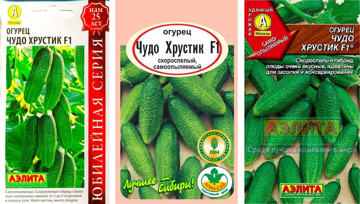 Отечественный гибрид огурцов «чудо хрустик f1»: фото, видео, описание, посадка, характеристика, урожайность, отзывы