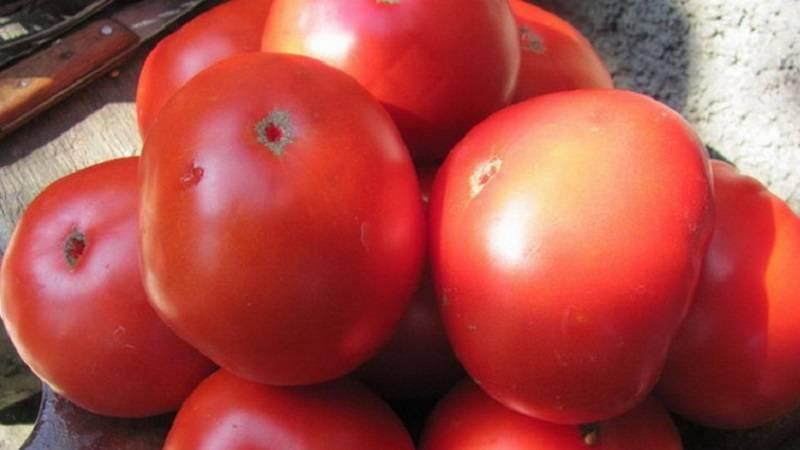 Вечный зов томаты отзывы