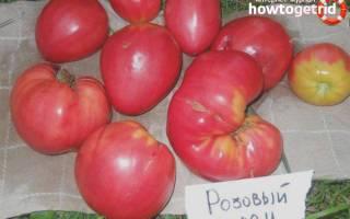 Сорт помидора «мечта огородника»: фото, видео, отзывы, описание, характеристика, урожайность