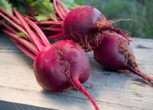 Особенности выращивания кормовой свеклы лада. уход, сбор урожая, болезни и вредители