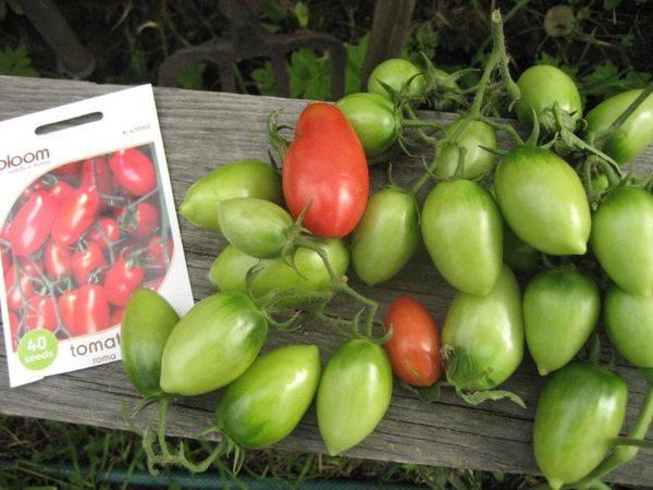 О популярном американском томате рома