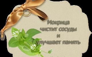 Мокрица: лечебные свойства и применение в народной медицине