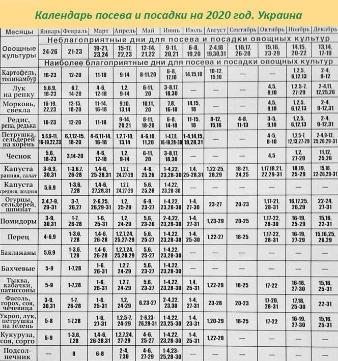 Лунный посевной календарь на 2020 год: огородника, садовода, таблица посева