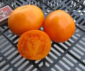 13 проверенных сортов томатов, которые я рекомендую посадить