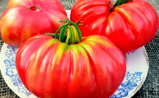 Главные характеристики томат солероссо: особенности посадки и выращивания