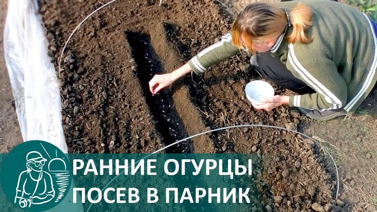 Легкий способ посадки огурцов в открытый грунт
