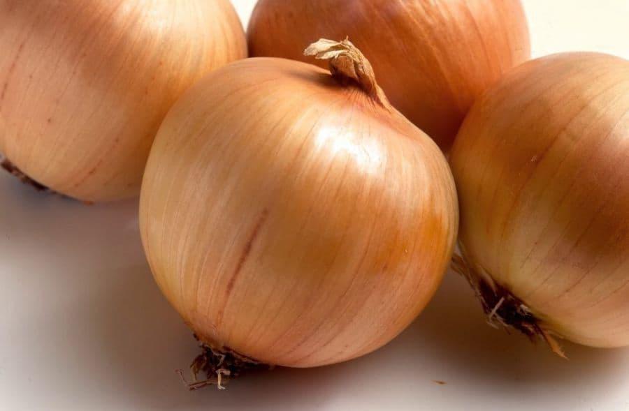 Вкусный лук геркулес: описание сорта, посадка и уход