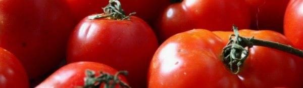 Сортовые особенности томата сенсей
