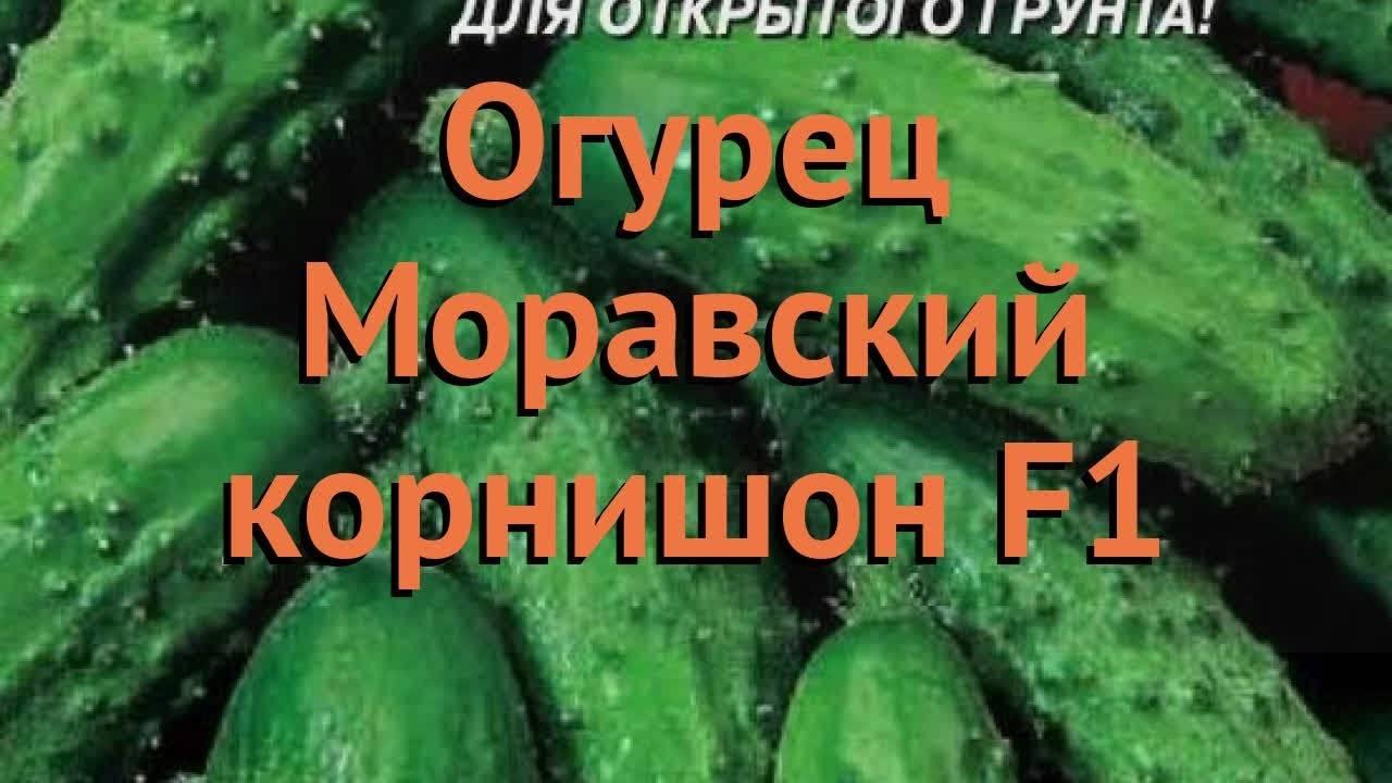 Огурцы корнишоны лучшие сорта