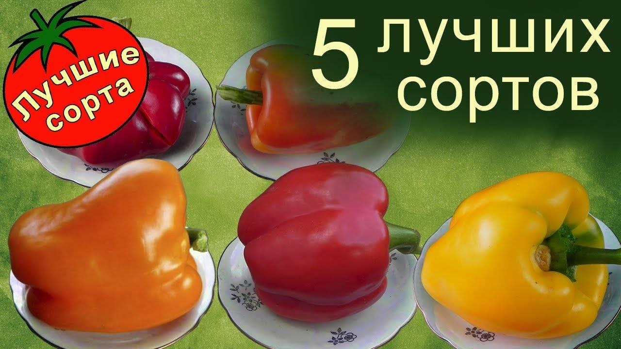 Описание и выращивание самых лучших сортов сладкого перца