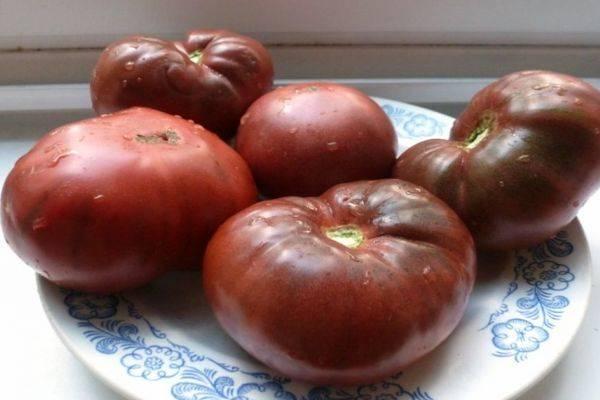 Томат цыган характеристика и описание сорта урожайность с фото