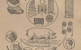 Цистицеркозы (финнозы) у животных, похожие и разные, но все они опасные