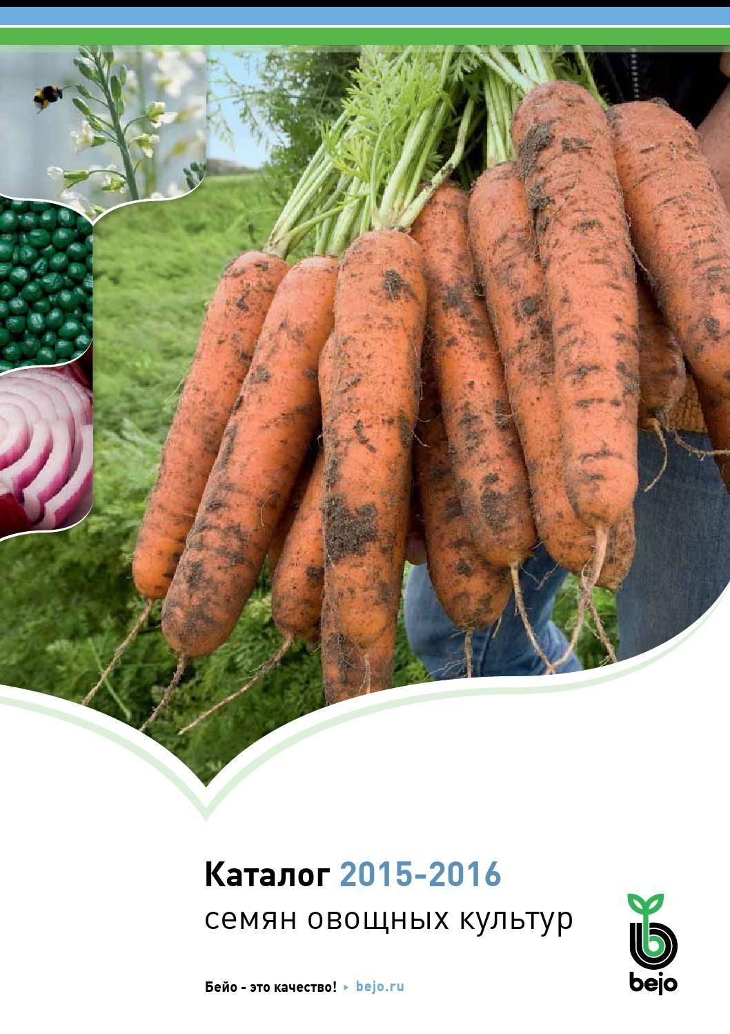Морковь шантане королевская отзывы