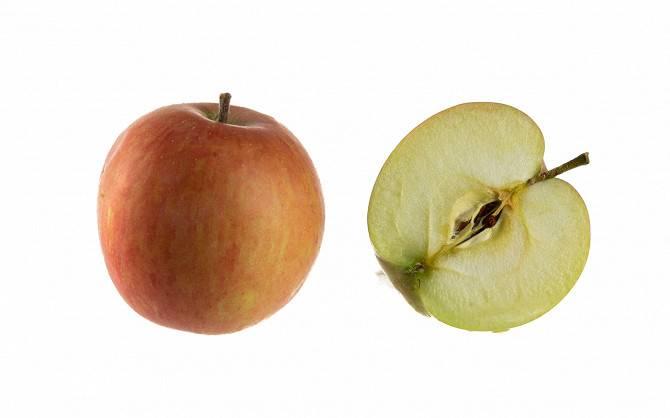 Яблоня Кальвиль Снежный: описание и характеристика сорта с фото
