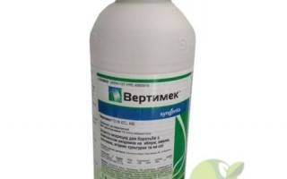 Вертимек для огурцов: эффективное средство от вредителей