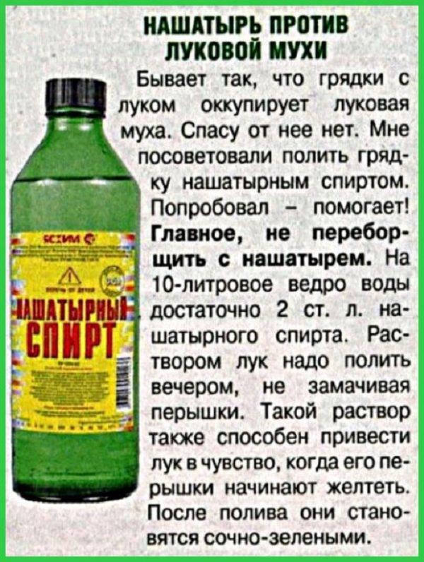 Как правильно подкормить лук нашатырным спиртом